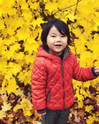 yellow-leaves_45134187654_o