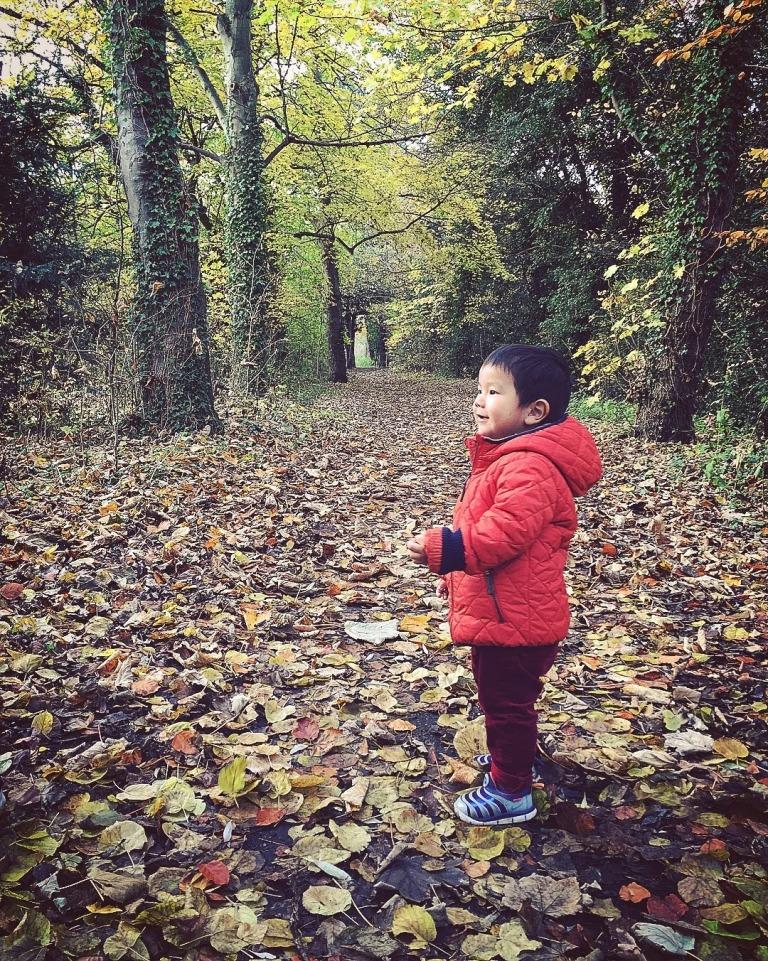 fall-walk_38875915661_o